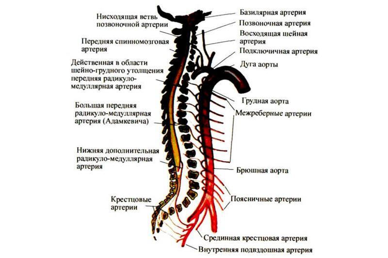 Нарушения спинномозгового кровообращения